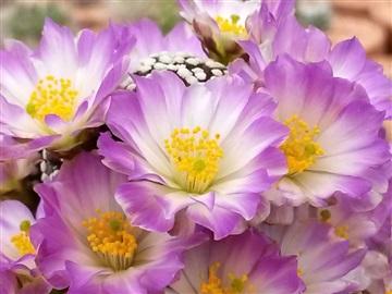 Blütenbilder von Jean Luc I2828830