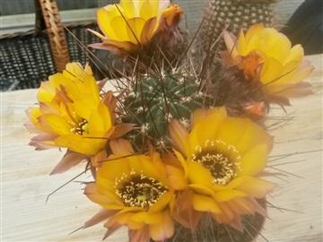 Blütenbilder von Jean Luc I2828831