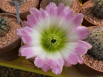 Blütenbilder von Jean Luc I2828832