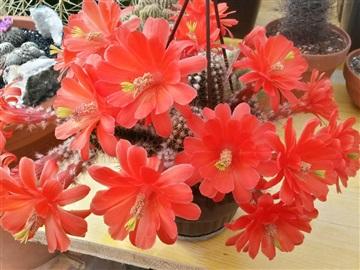 Blütenbilder von Jean Luc I2828834