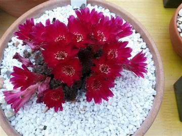 Blütenbilder von Jean Luc I2828836