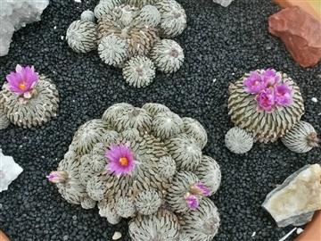 Blütenbilder von Jean Luc I2828837