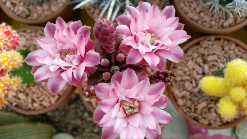 Blütenbilder von Jean Luc I2828839