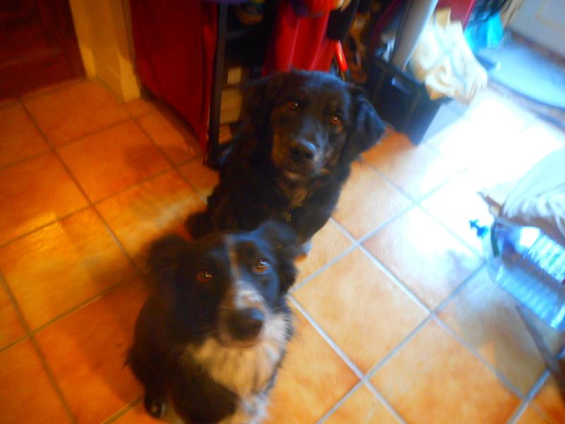 Stella, une amour de chienne très tétue ! Hiver_10