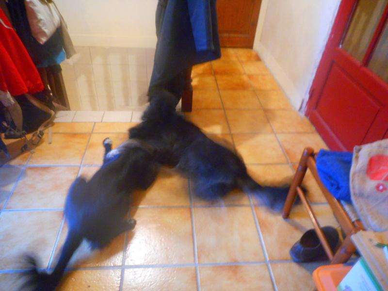 Stella, une amour de chienne très tétue ! Hiver_11