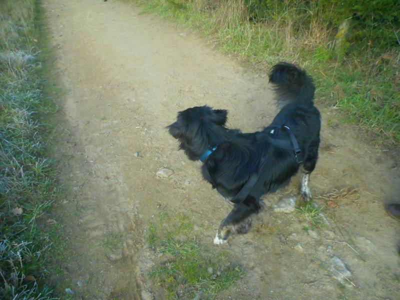 Stella, une amour de chienne très tétue ! Hiver_12