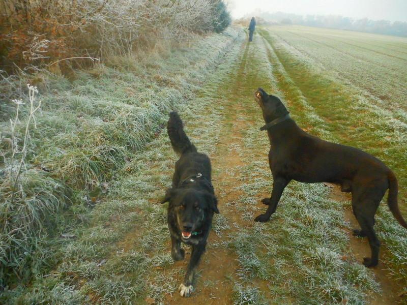Stella, une amour de chienne très tétue ! Hiver_15
