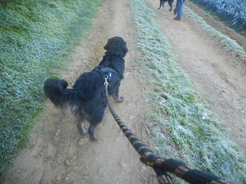 Stella, une amour de chienne très tétue ! Hiver_16