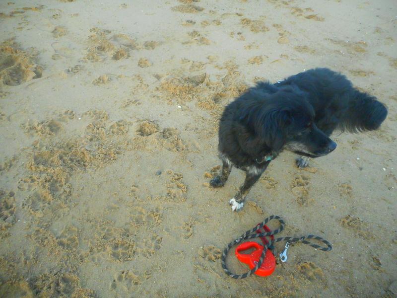 Stella, une amour de chienne très tétue ! Hiver_20
