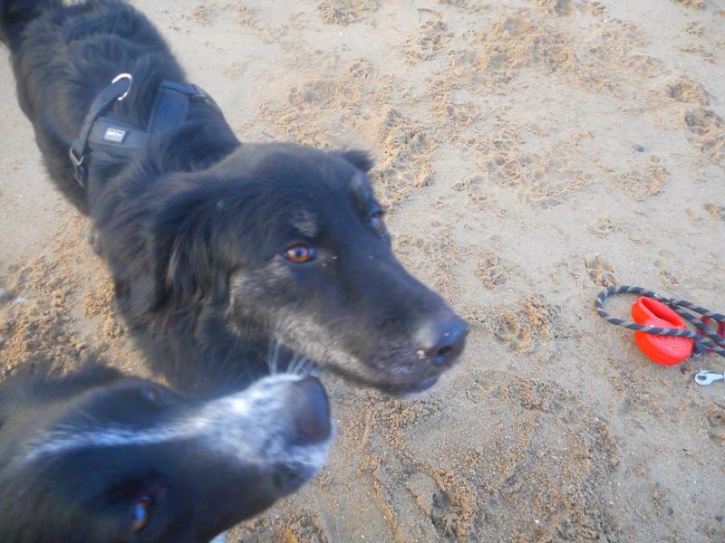 Stella, une amour de chienne très tétue ! Hiver_21