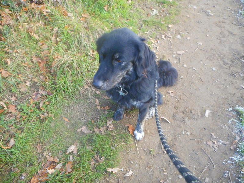 photos de vos chiens au naturel - Page 10 Hiver_26