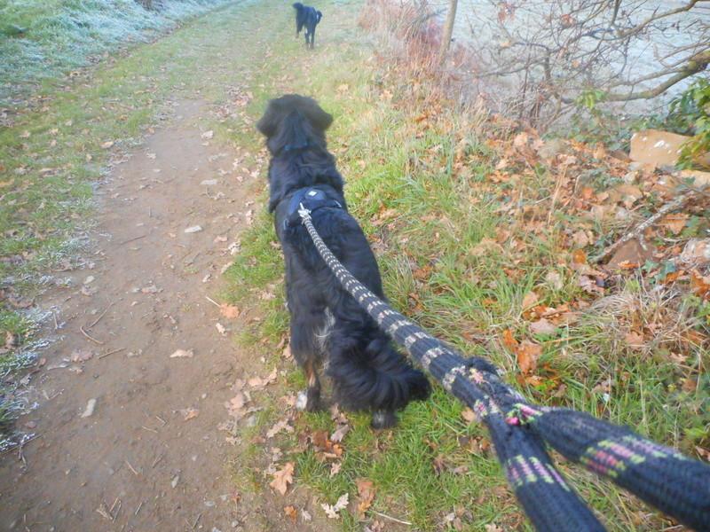 photos de vos chiens au naturel - Page 10 Hiver_27