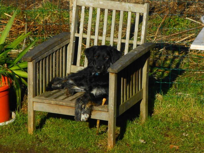 Stella, une amour de chienne très tétue ! - Page 2 Janvie15