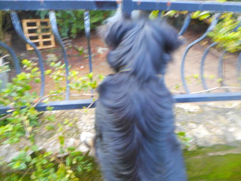 Stella, une amour de chienne très tétue ! - Page 2 Janvie18
