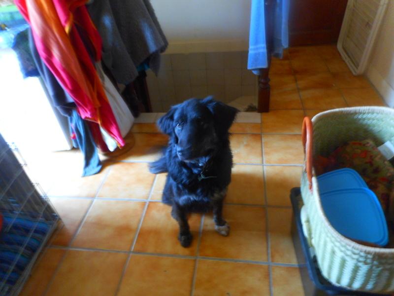 Stella, une amour de chienne très tétue ! Less_c15