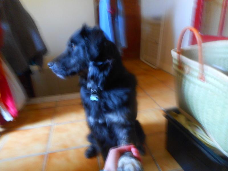 Stella, une amour de chienne très tétue ! Less_c17