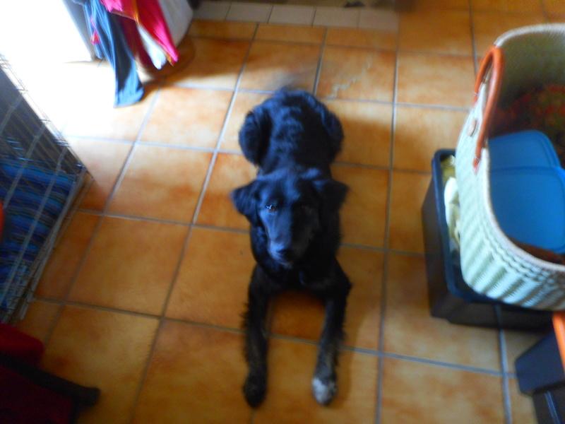 Stella, une amour de chienne très tétue ! Less_c18