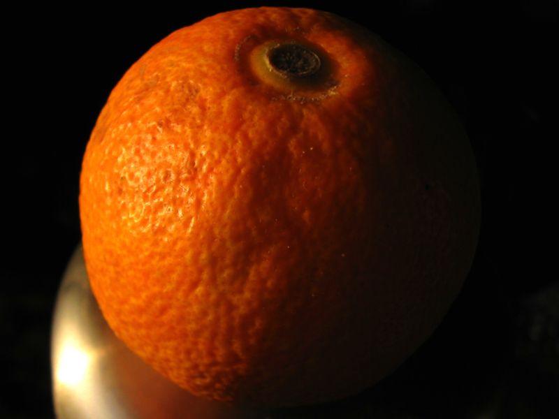 semis d'agrume Citrus10