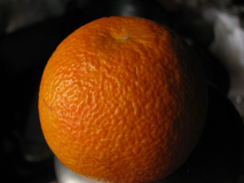 Citrus aurantium [identification à confirmer] Citrus11