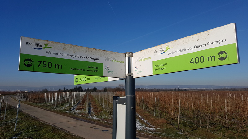"""65239 Hochheim - Mainz-Kostheim - Regionalpark Rhein-Main/""""Aussichtskanzel Vogelnest"""" 20170146"""
