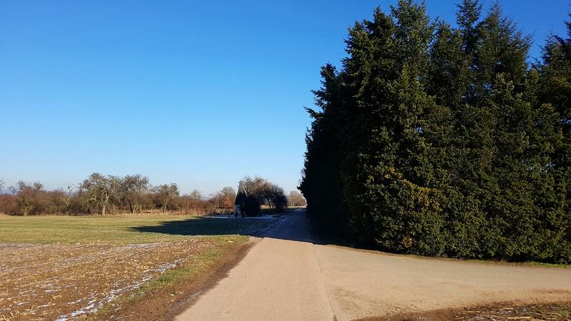 """65239 Hochheim - Mainz-Kostheim - Regionalpark Rhein-Main/""""Aussichtskanzel Vogelnest"""" 20170156"""