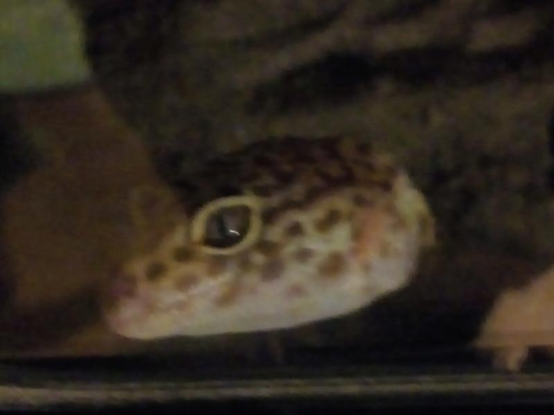 Materiel pour un gecko léopard  Img_2011