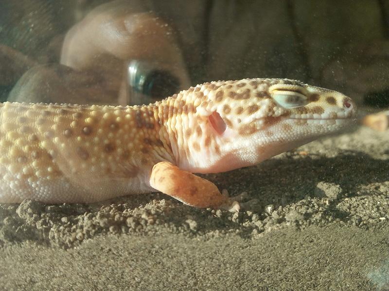 Materiel pour un gecko léopard  - Page 2 Img_2012