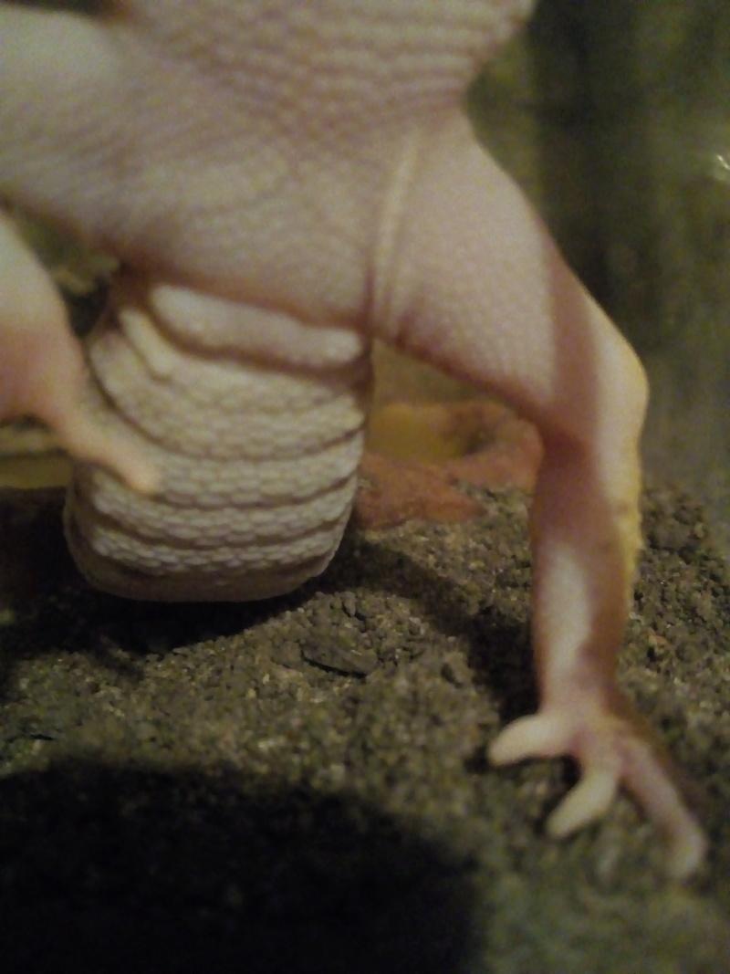Materiel pour un gecko léopard  - Page 2 Img_2015