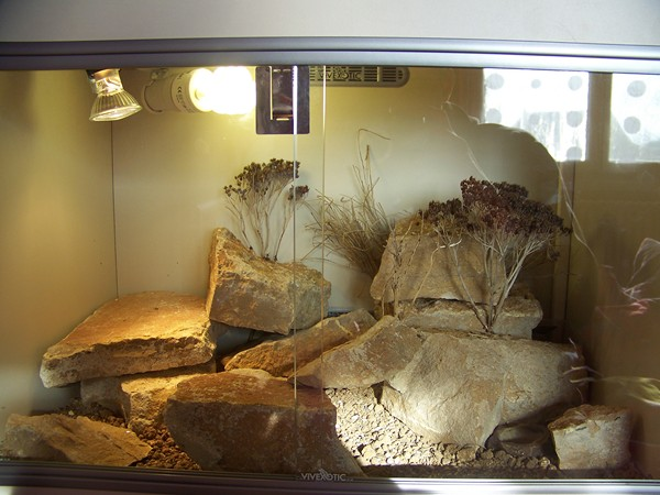 Mes Geckos Leopard - Page 3 48745510