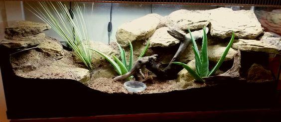 Mes Geckos Leopard - Page 3 78ab2610
