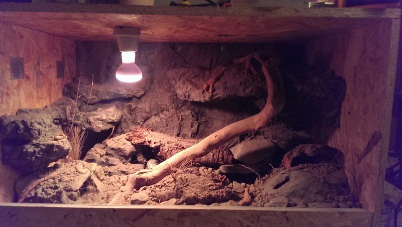 Mes Geckos Leopard - Page 3 88578310