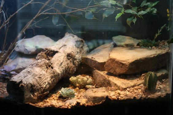 Mes Geckos Leopard - Page 3 D6ae2210