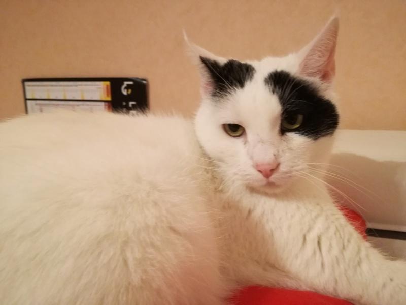 goldorak - Goldorak - Mâle blanc noir -Type européen -  Né en juin 2011 Img_2012