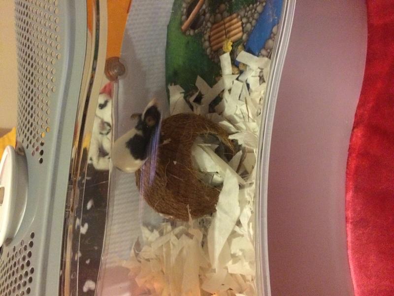New mice mummy Img_0014