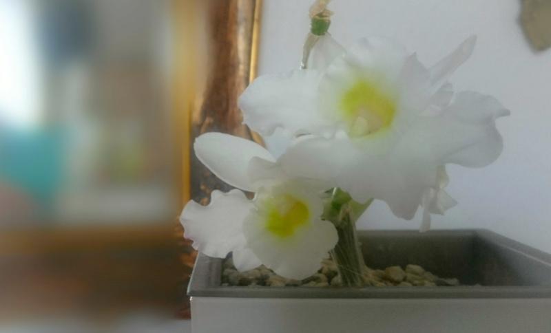 Orchideen 2 (fortlaufende Seiten 200 bis 300) - Seite 51 Psx_2010