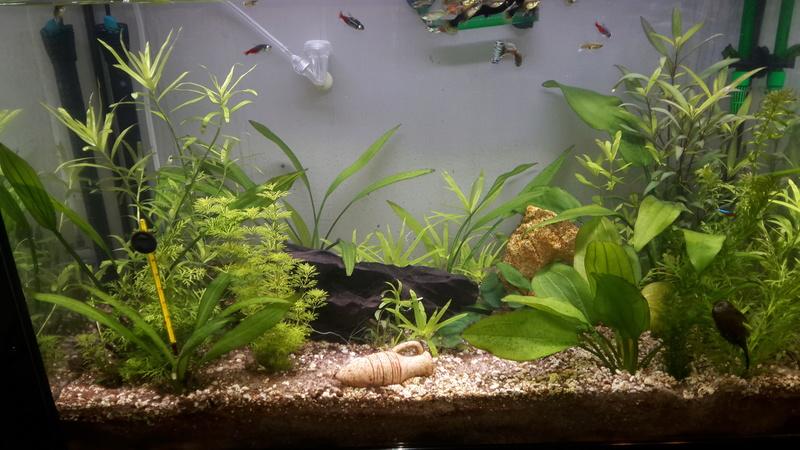 Mon aquarieum 120 litres 20170133