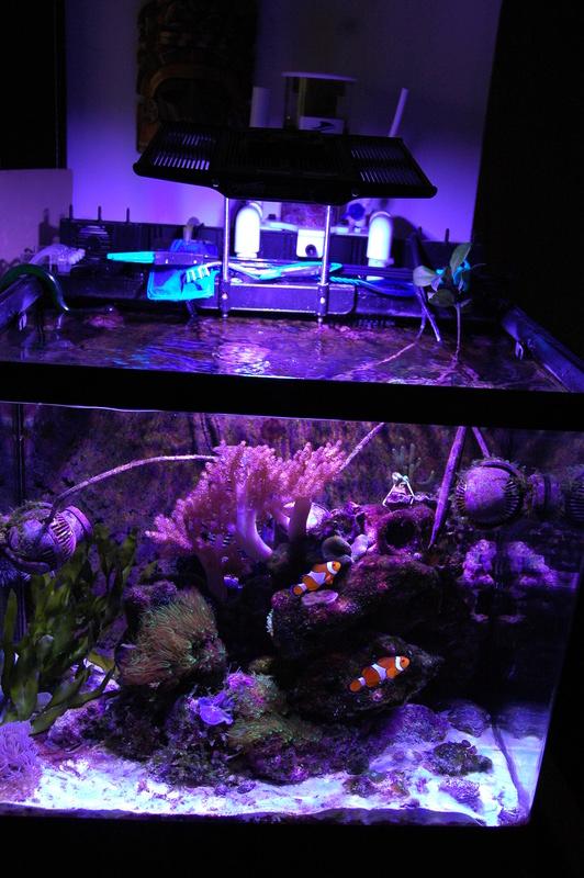 Présentation aquarium 130l. Dsc_0010