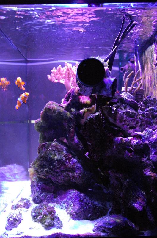 Présentation aquarium 130l. Dsc_0011