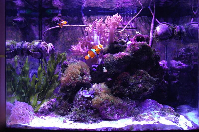 Présentation aquarium 130l. Dsc_0012