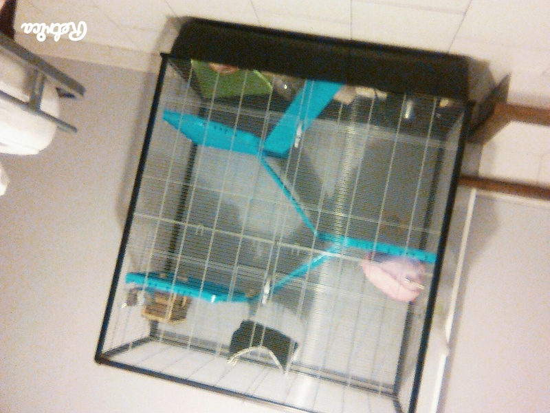 Mes Poilus  Cage11