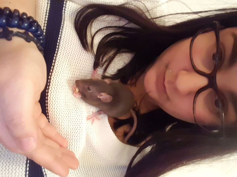 Help !!! 2 rats ? ah non 8...... - Page 2 20170210