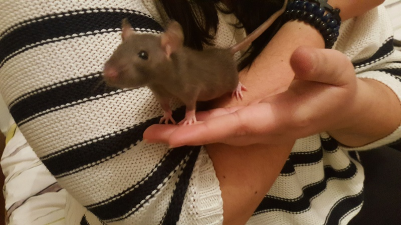 Help !!! 2 rats ? ah non 8...... - Page 2 20170211