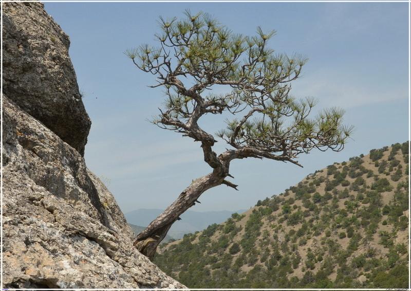 Деревья на скалах 1_ed3010