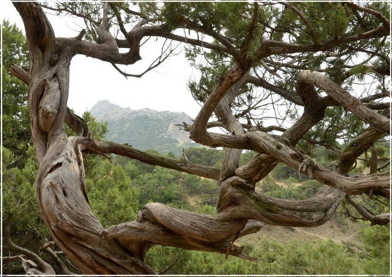 Деревья на скалах 1_ed3012