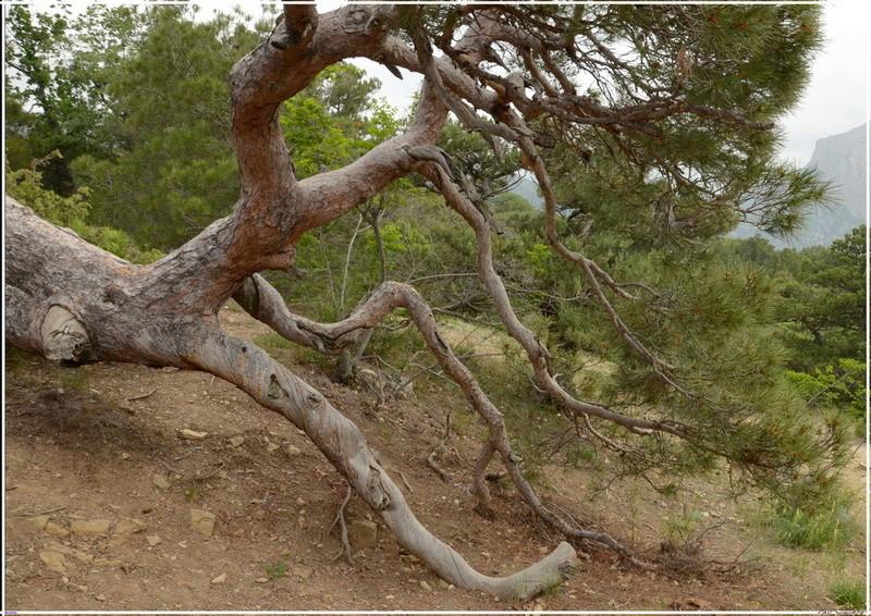 Деревья на скалах 1_ed3013