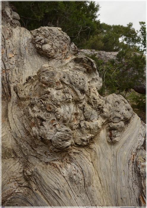 Деревья на скалах 1_ed3015