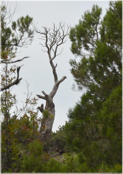 Деревья на скалах 1_ed3017