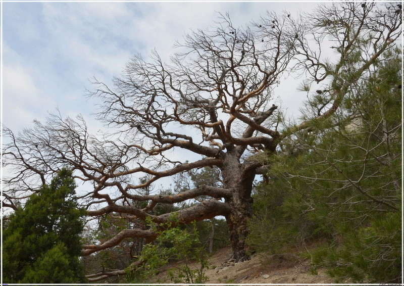 Деревья на скалах 1_ed3110