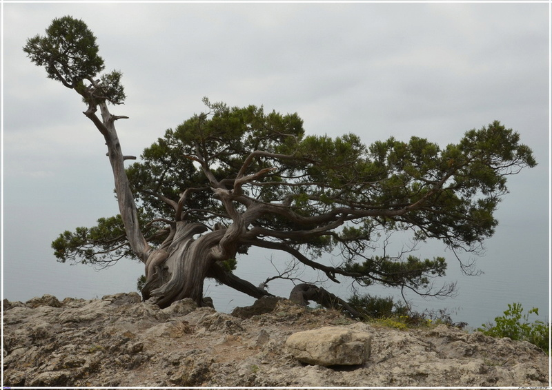 Деревья на скалах 1_ed3112