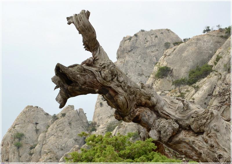 Деревья на скалах 1_ed3113